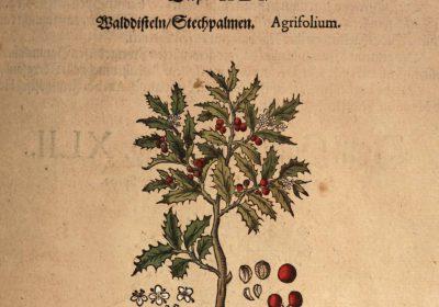 Kreutterbuch_des_Pietro_Andrea_Mattioli_1586